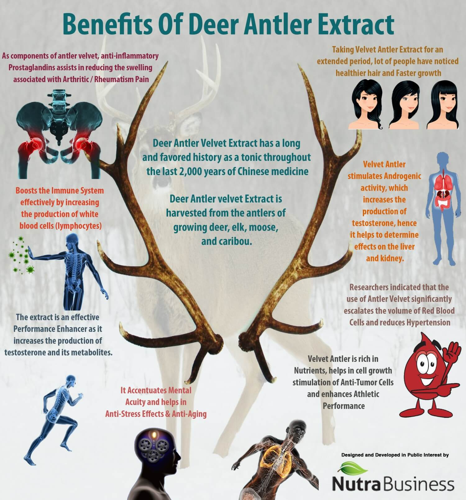 The Benefits of Deer Antler Velvet