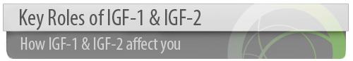 HGH IGF 1 IGF 2 hormone booster Key Rolls